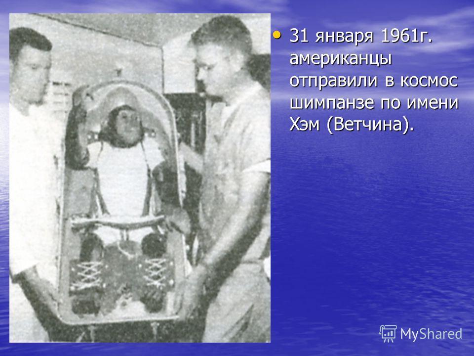 31 января 1961г. американцы отправили в космос шимпанзе по имени Хэм (Ветчина). 31 января 1961г. американцы отправили в космос шимпанзе по имени Хэм (Ветчина).