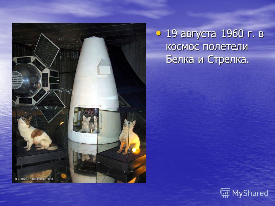 19 августа 1960 г. в космос полетели Белка и Стрелка.