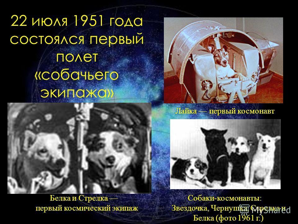 22 июля 1951 года состоялся первый полет «собачьего экипажа» Лайка первый космонавт Белка и Стрелка первый космический экипаж Собаки-космонавты: Звездочка, Чернушка, Стрелка и Белка (фото 1961 г.)