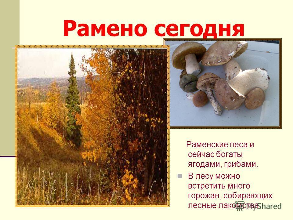 Рамено сегодня Раменские леса и сейчас богаты ягодами, грибами. В лесу можно встретить много горожан, собирающих лесные лакомства