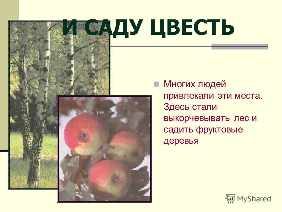 И САДУ ЦВЕСТЬ Многих людей привлекали эти места. Здесь стали выкорчевывать лес и садить фруктовые деревья