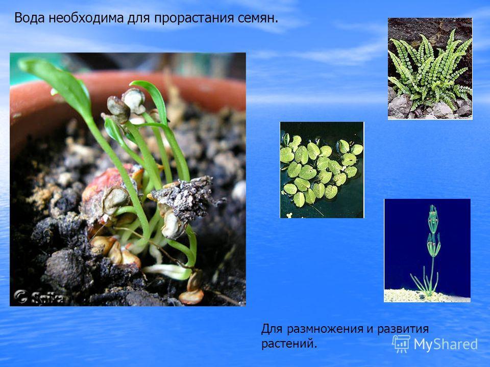 Вода необходима для прорастания семян. Для размножения и развития растений.