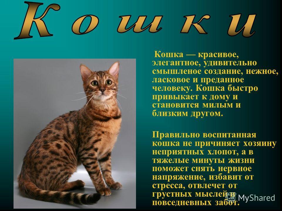 Кошка красивое, элегантное, удивительно смышленое создание, нежное, ласковое и преданное человеку. Кошка быстро привыкает к дому и становится милым и близким другом. Правильно воспитанная кошка не причиняет хозяину неприятных хлопот, а в тяжелые мину