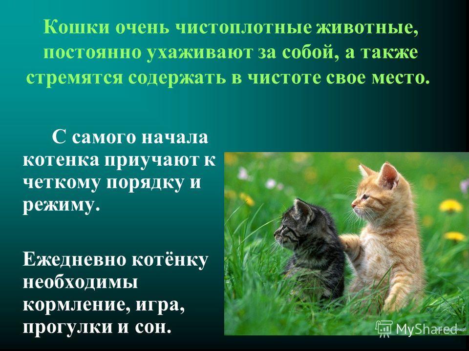 Кошки очень чистоплотные животные, постоянно ухаживают за собой, а также стремятся содержать в чистоте свое место. С самого начала котенка приучают к четкому порядку и режиму. Ежедневно котёнку необходимы кормление, игра, прогулки и сон.