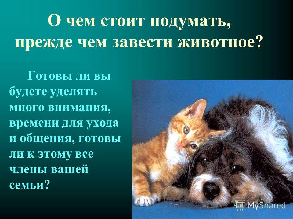 О чем стоит подумать, прежде чем завести животное? Готовы ли вы будете уделять много внимания, времени для ухода и общения, готовы ли к этому все члены вашей семьи?