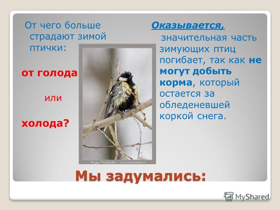 Мы задумались: От чего больше страдают зимой птички: от голода или холода? Оказывается, значительная часть зимующих птиц погибает, так как не могут добыть корма, который остается за обледеневшей коркой снега.