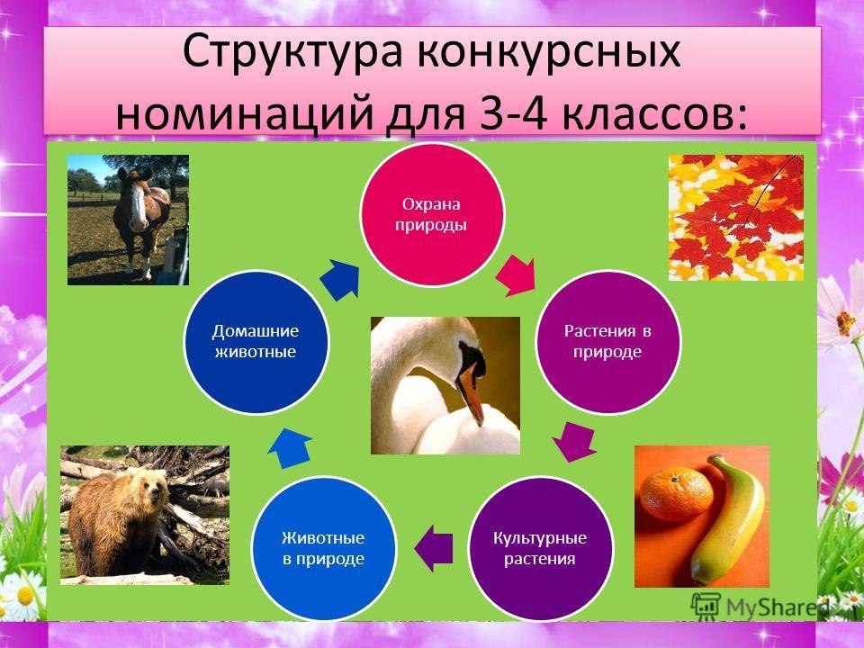 Структура конкурсных номинаций для 1-2 классов: Растения в природе Культурные растения Животные в природе Домашние животные