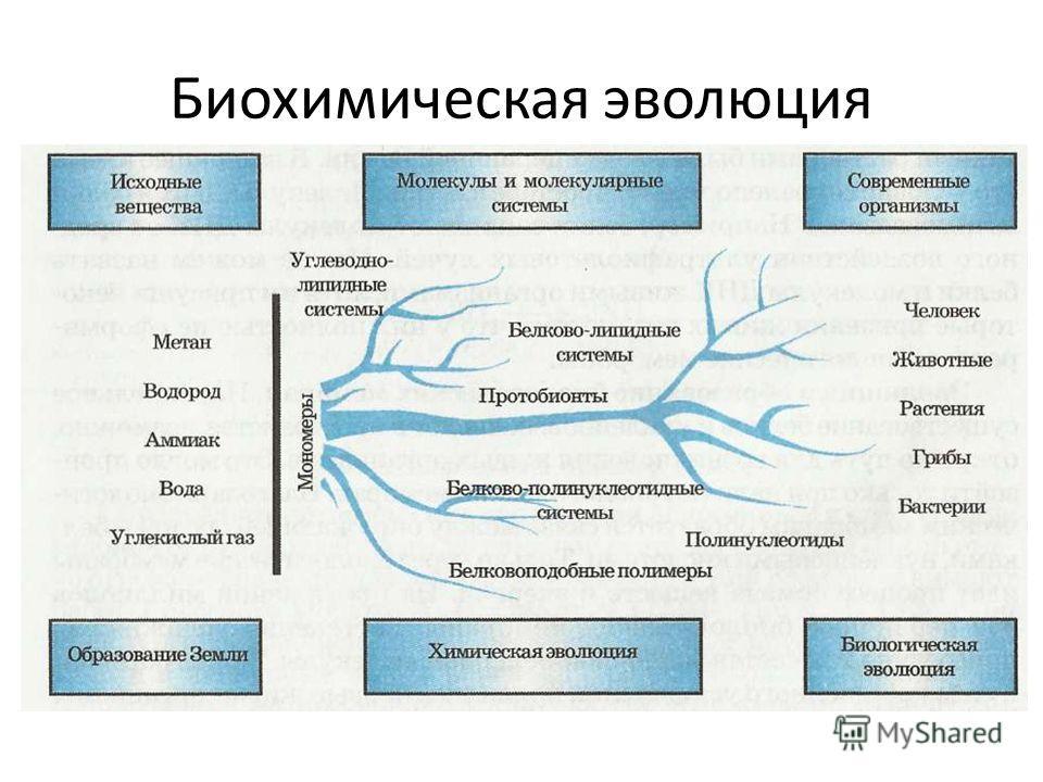 Биохимическая эволюция