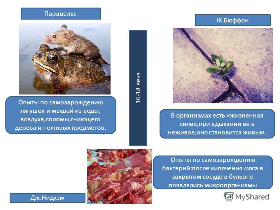 Парацельс Опыты по самозарождению лягушек и мышей из воды, воздуха,соломы,гниющего дерева и неживых предметов. Ж.Бюффон В организмах есть «жизненная сила»,при вдыхании её в неживое,оно становится живым. Дж.Нидхэм Опыты по самозарождению бактерий:посл