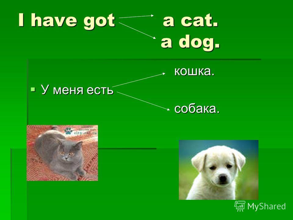 Проект по английскому языку 3 класс на тему домашнего животного