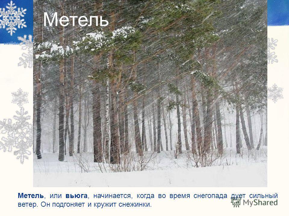 Метель, или вьюга, начинается, когда во время снегопада дует сильный ветер. Он подгоняет и кружит снежинки. Метель