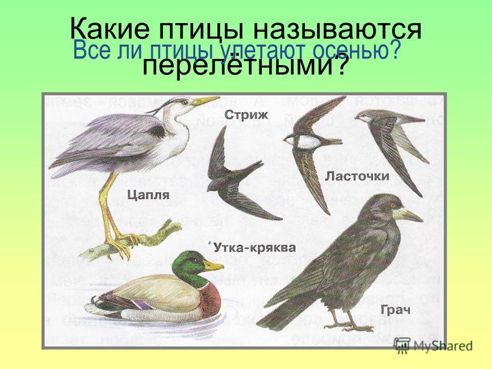 Птицы питаются разнообразным кормом. Для многих из них основным кормом служат насекомые, плоды и семена растений. С наступлением холодов исчезают насекомые, на растениях уже не видно обилия плодов и семян.