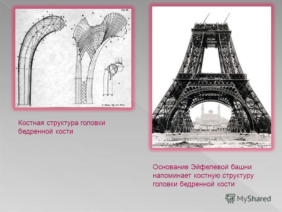 Костная структура головки бедренной кости Основание Эйфелевой башни напоминает костную структуру головки бедренной кости