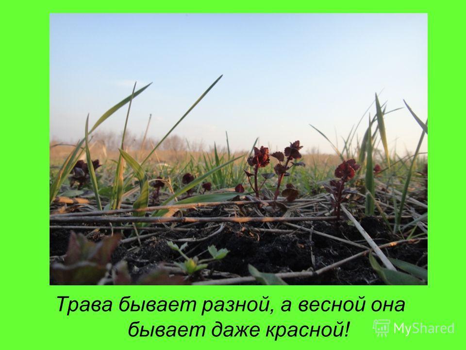 Трава бывает разной, а весной она бывает даже красной!