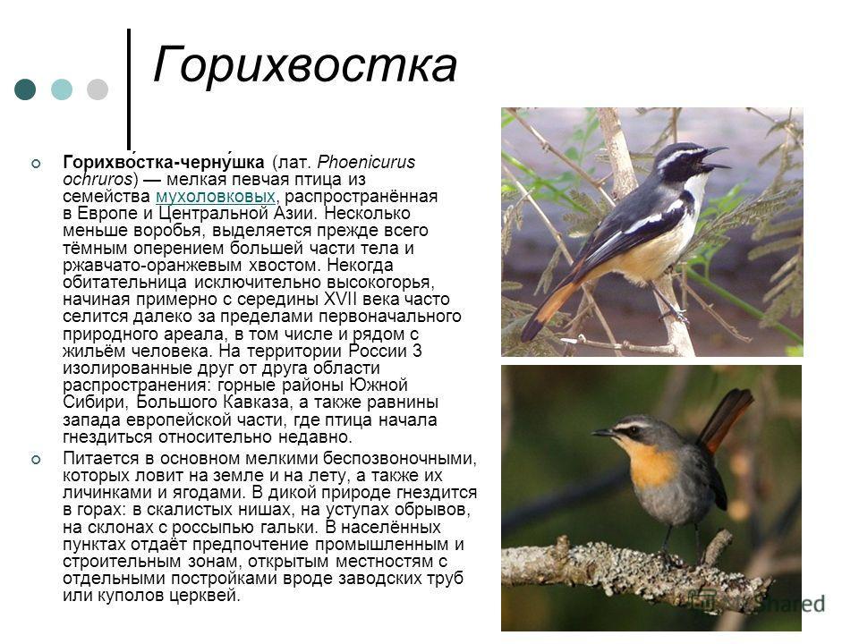 Горихвостка Горихво́стка-черну́шка (лат. Phoenicurus ochruros) мелкая певчая птица из семейства мухоловковых, распространённая в Европе и Центральной Азии. Несколько меньше воробья, выделяется прежде всего тёмным оперением большей части тела и ржавча