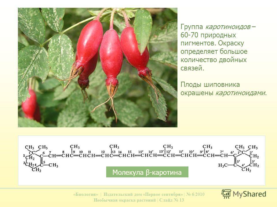 «Биология» | Издательский дом «Первое сентября» | 6/2010 Необычная окраска растений | Слайд 13 Группа каротиноидов – 60-70 природных пигментов. Окраску определяет большое количество двойных связей. Плоды шиповника окрашены каротиноидами. Молекула β-к