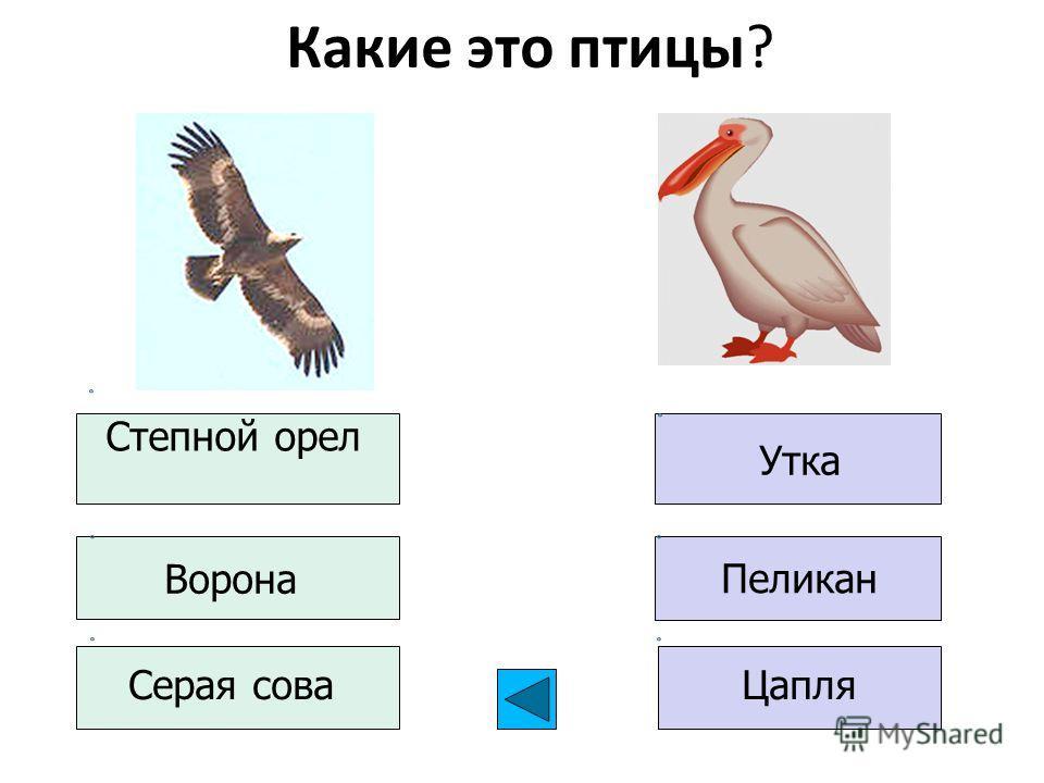 Какие это птицы? Степной орел Ворона Серая сова Пеликан Утка Цапля