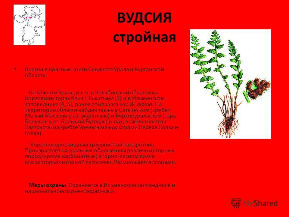 Растения Занесённые В Красную Книгу Челябинской Области