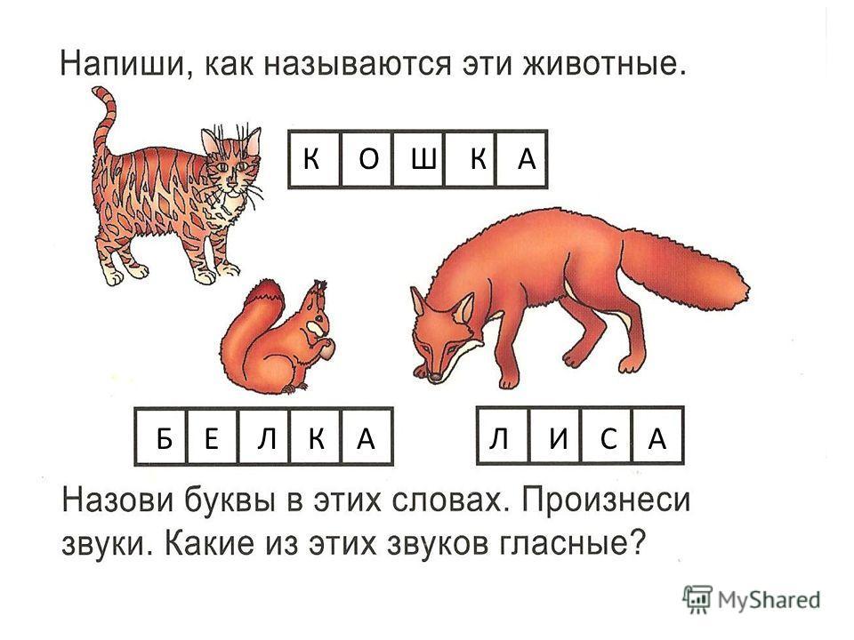 К О Ш К А Б Е Л К А Л И С А