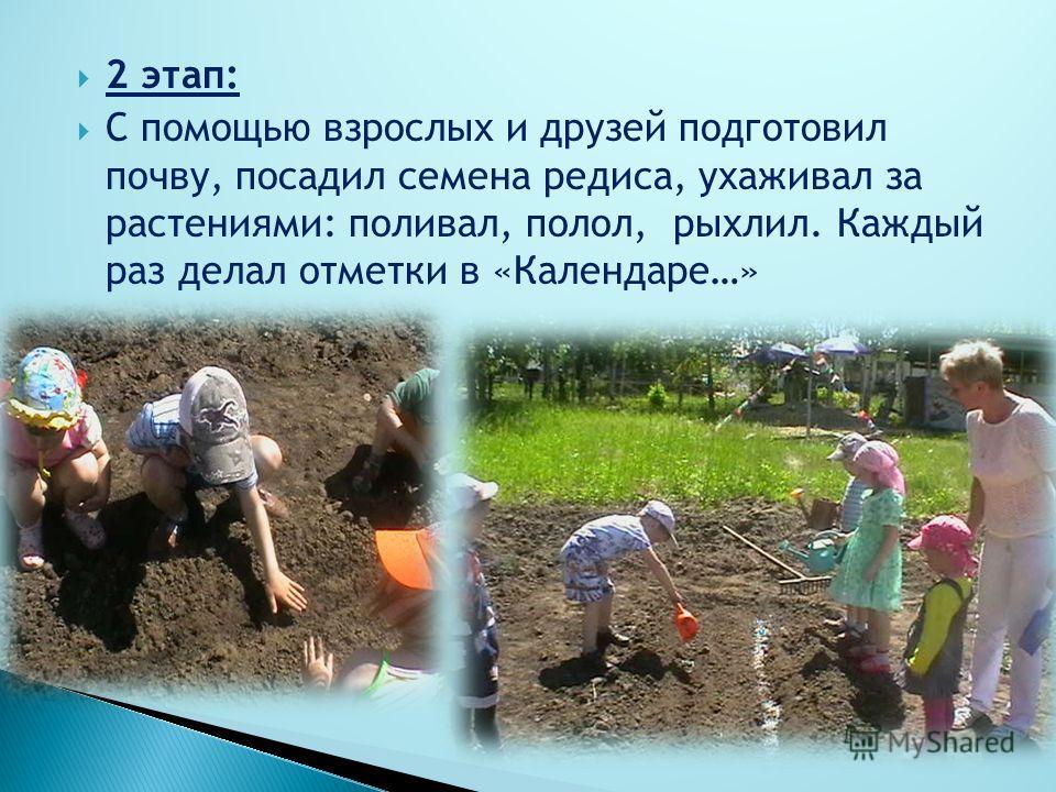 2 этап: С помощью взрослых и друзей подготовил почву, посадил семена редиса, ухаживал за растениями: поливал, полол, рыхлил. Каждый раз делал отметки в «Календаре…»