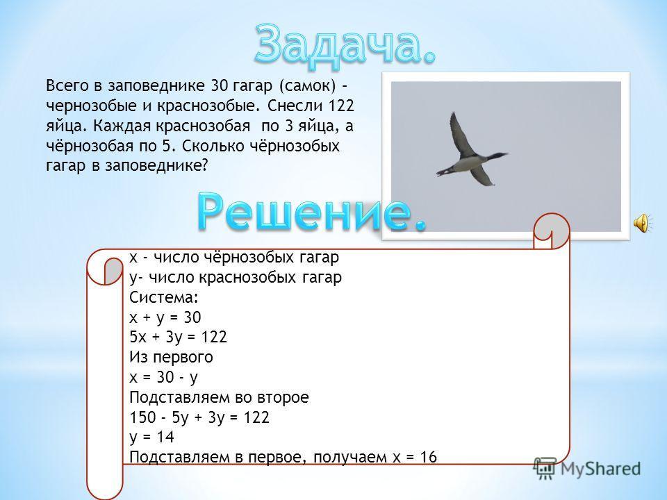 Всего в заповеднике 30 гагар (самок) – чернозобые и краснозобые. Снесли 122 яйца. Каждая краснозобая по 3 яйца, а чёрнозобая по 5. Сколько чёрнозобых гагар в заповеднике? x - число чёрнозобых гагар y- число краснозобых гагар Система: x + y = 30 5x +