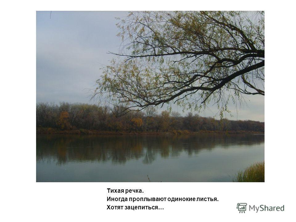 Тихая речка. Иногда проплывают одинокие листья. Хотят зацепиться…