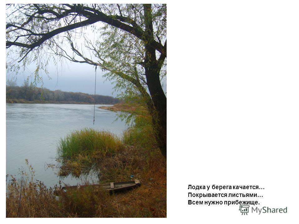 Лодка у берега качается… Покрывается листьями… Всем нужно прибежище.