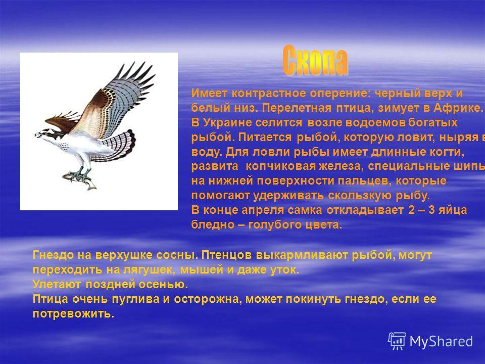 Имеет контрастное оперение: черный верх и белый низ. Перелетная птица, зимует в Африке. В Украине селится возле водоемов богатых рыбой. Питается рыбой, которую ловит, ныряя в воду. Для ловли рыбы имеет длинные когти, развита копчиковая железа, специа