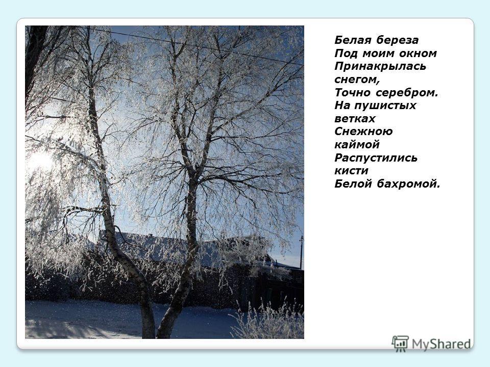 Белая береза Под моим окном Принакрылась снегом, Точно серебром. На пушистых ветках Снежною каймой Распустились кисти Белой бахромой.