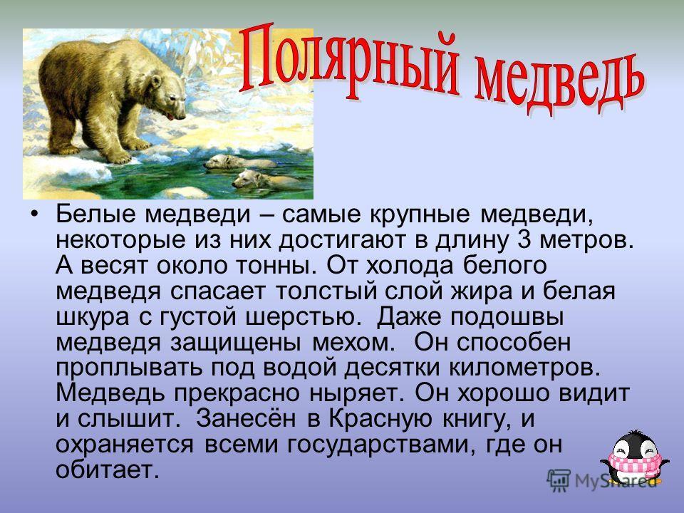 Белые медведи – самые крупные медведи, некоторые из них достигают в длину 3 метров. А весят около тонны. От холода белого медведя спасает толстый слой жира и белая шкура с густой шерстью. Даже подошвы медведя защищены мехом. Он способен проплывать по