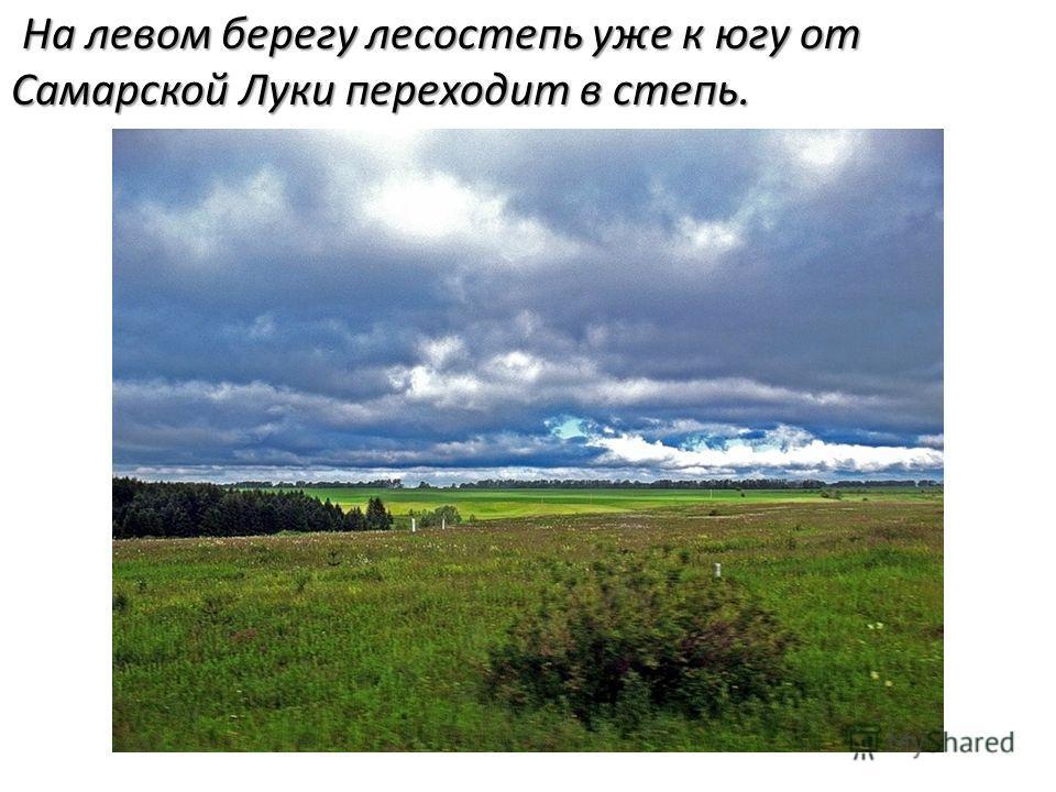 На левом берегу лесостепь уже к югу от Самарской Луки переходит в степь. На левом берегу лесостепь уже к югу от Самарской Луки переходит в степь.