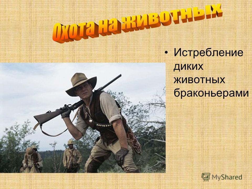 Истребление диких животных браконьерами