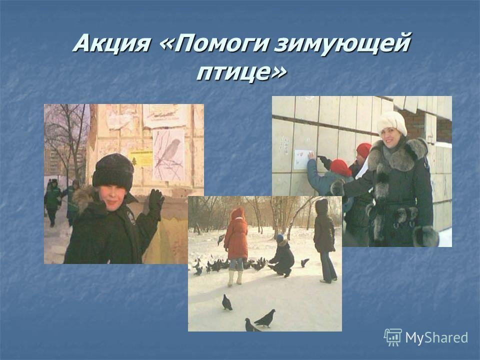 Акция «Помоги зимующей птице»