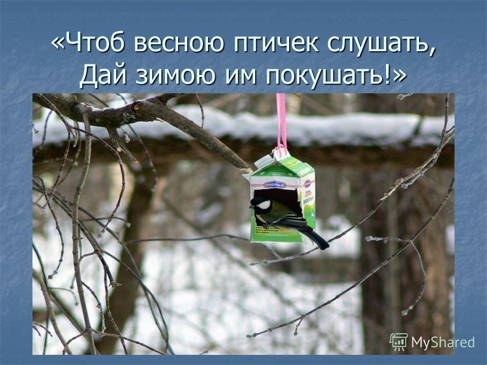 «Чтоб весною птичек слушать, Дай зимою им покушать!»