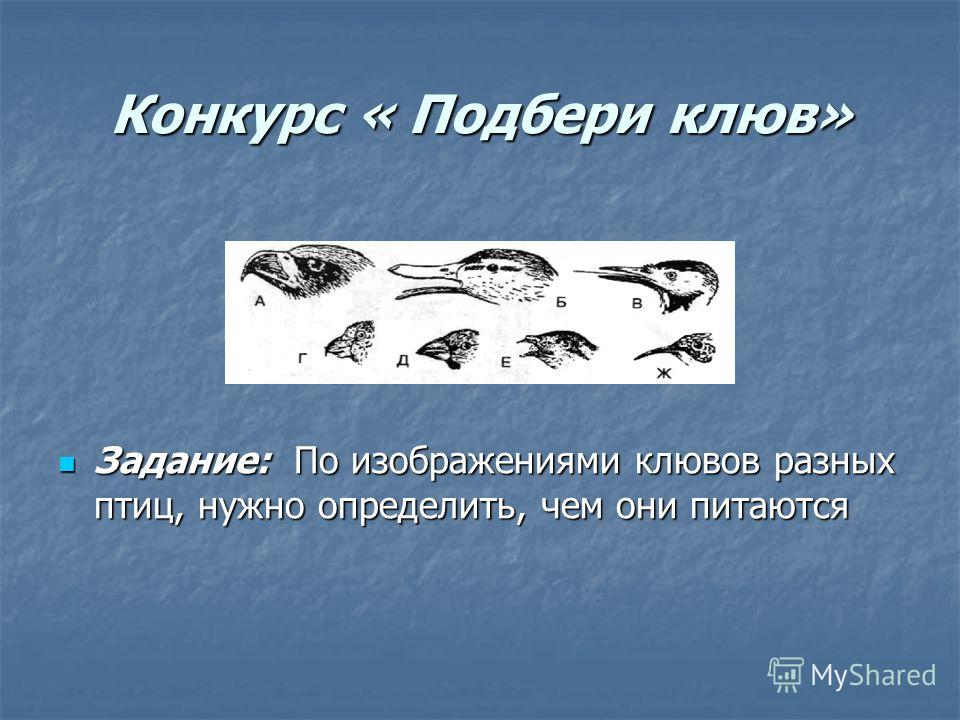 Конкурс « Подбери клюв» Задание: По изображениями клювов разных птиц, нужно определить, чем они питаются Задание: По изображениями клювов разных птиц, нужно определить, чем они питаются