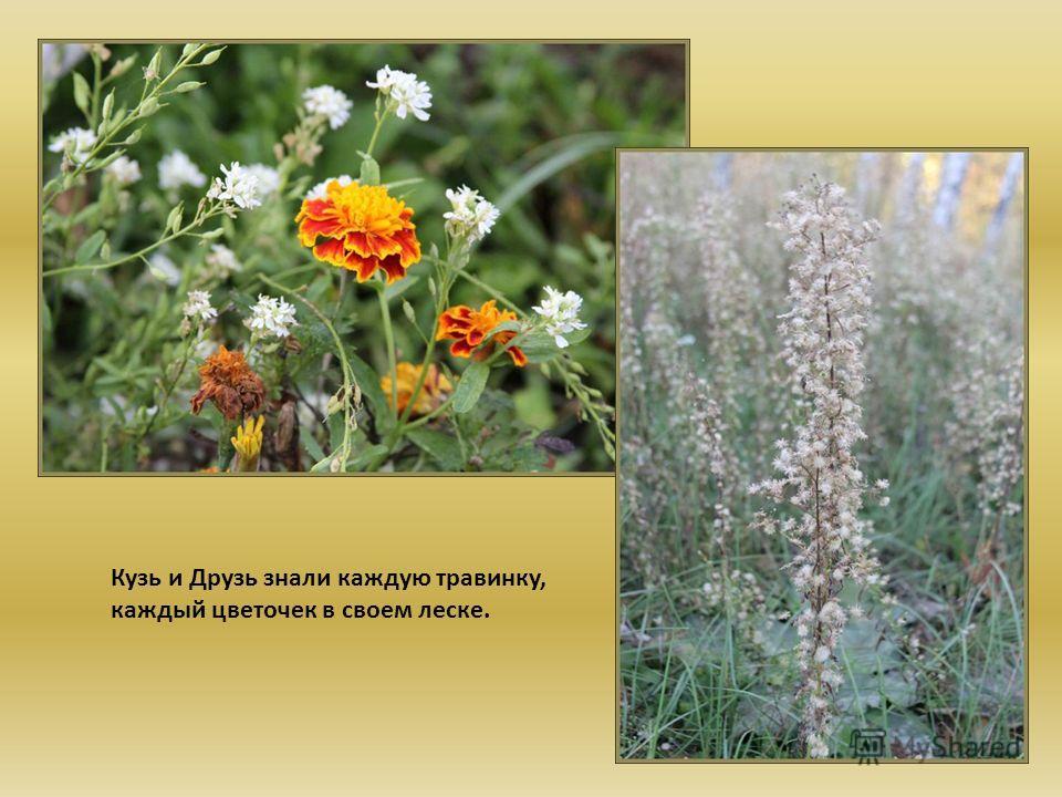 Кузь и Друзь знали каждую травинку, каждый цветочек в своем леске.
