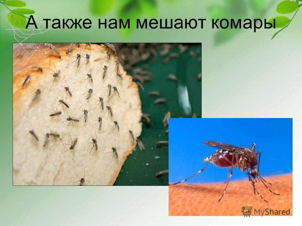 А также нам мешают комары
