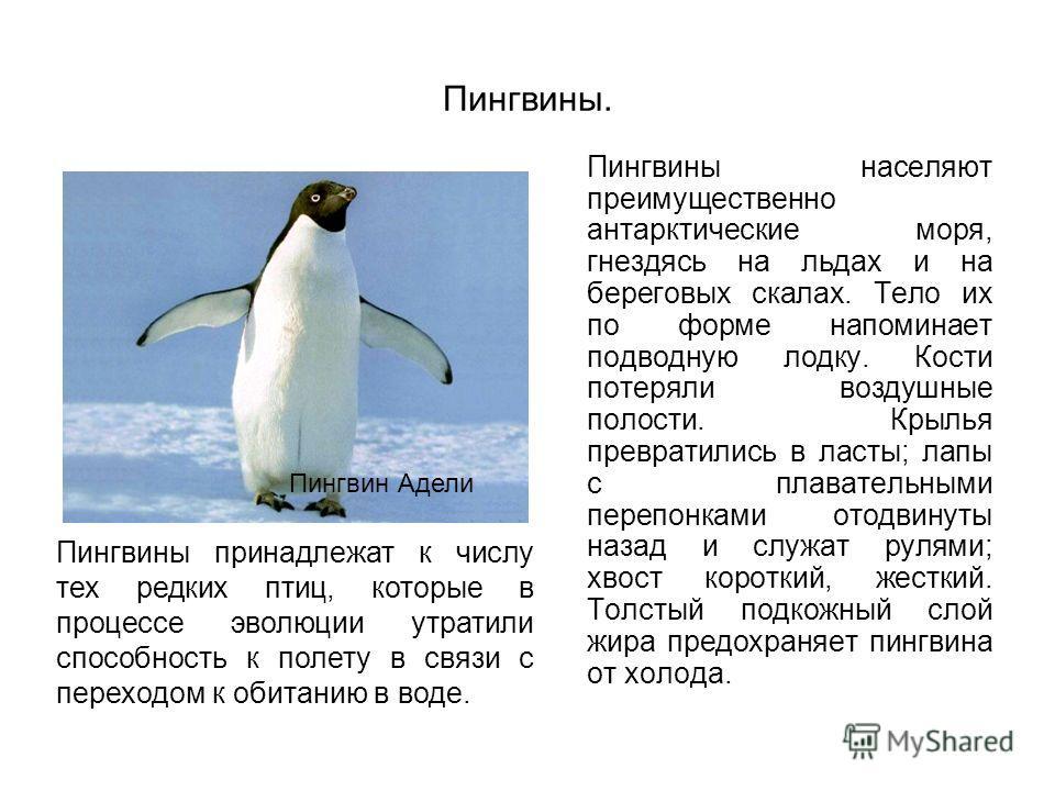 Пингвины. Пингвины населяют преимущественно антарктические моря, гнездясь на льдах и на береговых скалах. Тело их по форме напоминает подводную лодку. Кости потеряли воздушные полости. Крылья превратились в ласты; лапы с плавательными перепонками ото