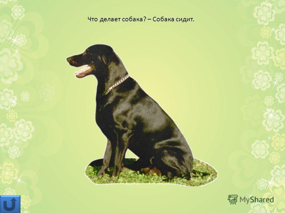 Что делает собака? – Собака сидит.