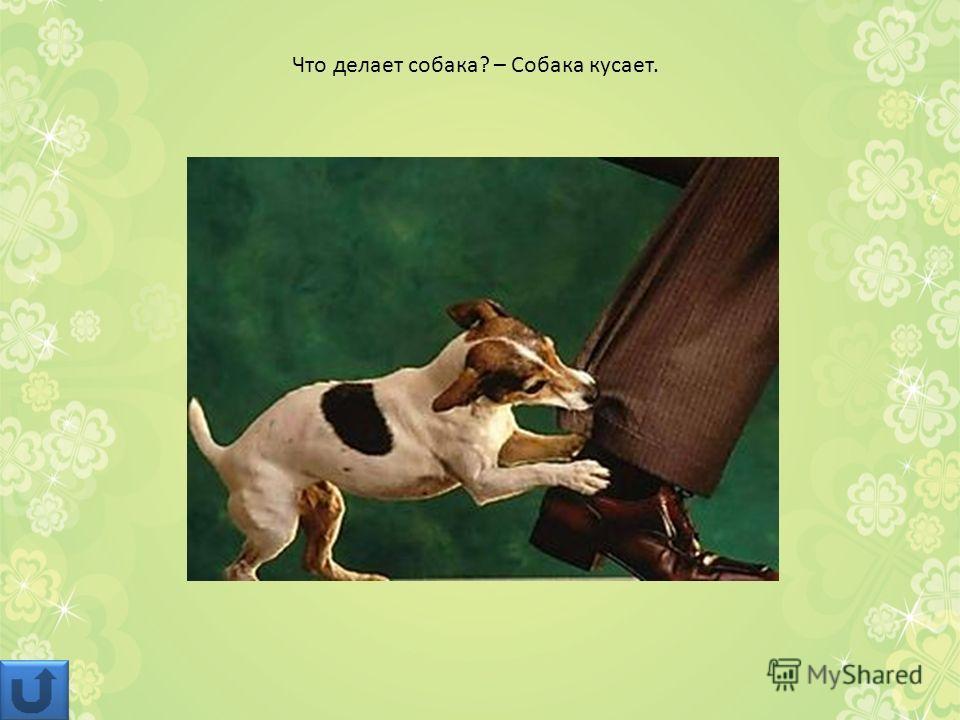 Что делает собака? – Собака кусает.