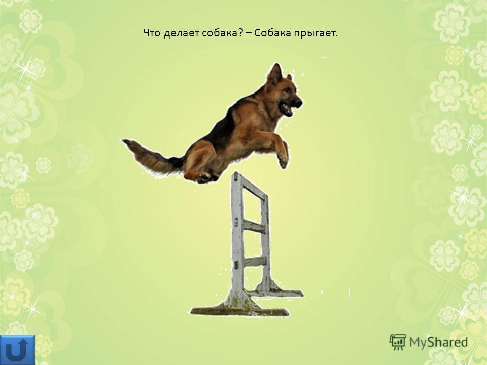Что делает собака? – Собака прыгает.