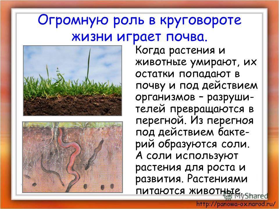 Огромную роль в круговороте жизни играет почва. Когда растения и животные умирают, их остатки попадают в почву и под действием организмов – разруши- телей превращаются в перегной. Из перегноя под действием бакте- рий образуются соли. А соли использую