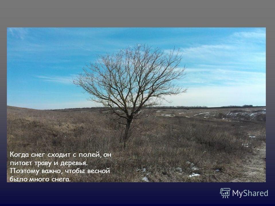 Когда снег сходит с полей, он питает траву и деревья. Поэтому важно, чтобы весной было много снега.