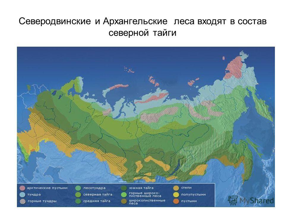 Северодвинские и Архангельские леса входят в состав северной тайги