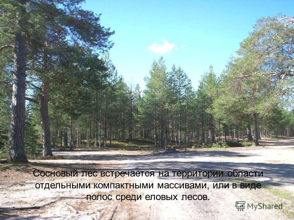 Сосновый лес встречается на территории области отдельными компактными массивами, или в виде полос среди еловых лесов.