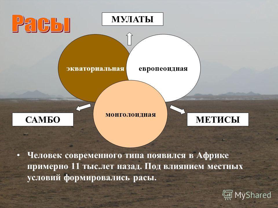 Человек современного типа появился в Африке примерно 11 тыс.лет назад. Под влиянием местных условий формировались расы. экваториальнаяевропеоидная монголоидная САМБО МУЛАТЫ МЕТИСЫ