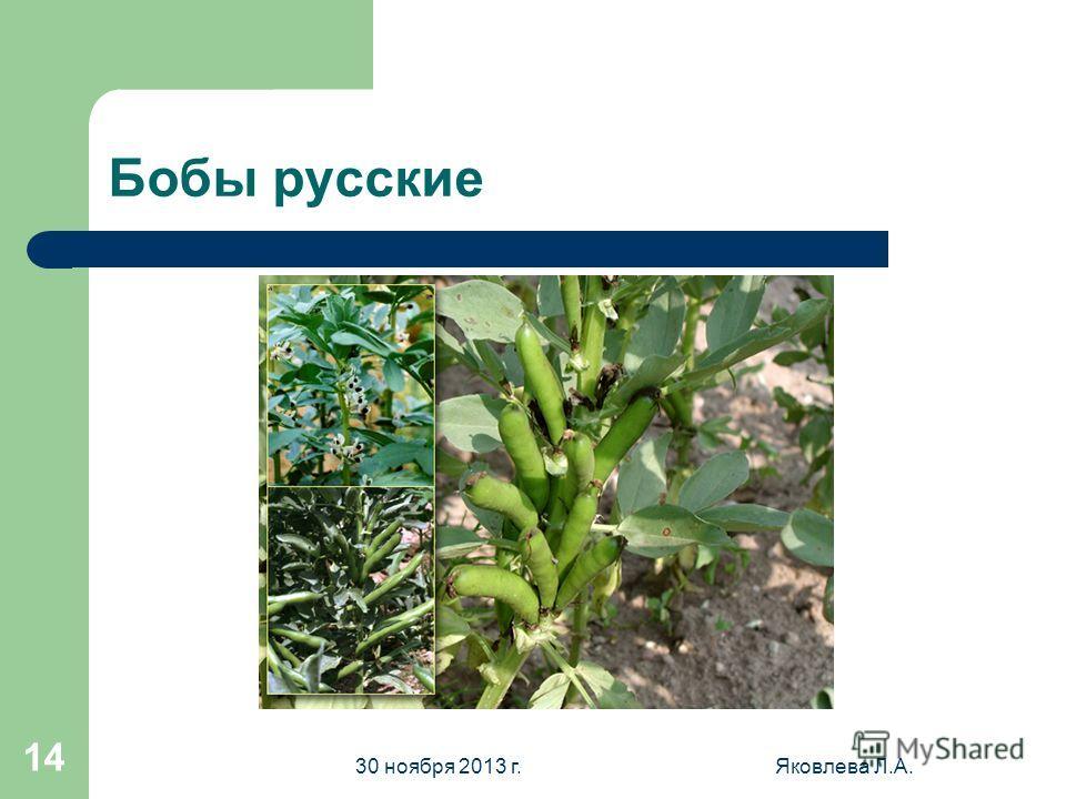 30 ноября 2013 г.Яковлева Л.А. 13 Фасоль