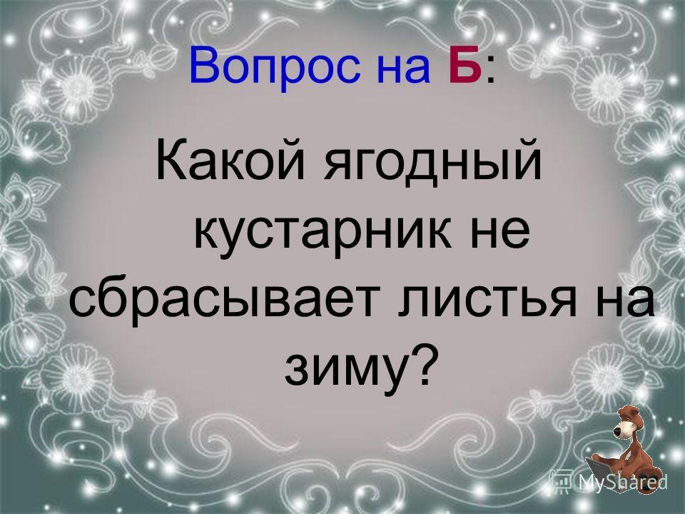 Вопрос на Б: Какой ягодный кустарник не сбрасывает листья на зиму?