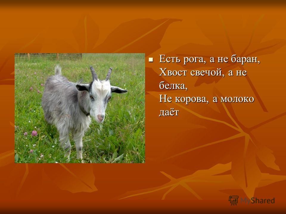 Есть рога, а не баран, Хвост свечой, а не белка, Не корова, а молоко даёт Есть рога, а не баран, Хвост свечой, а не белка, Не корова, а молоко даёт