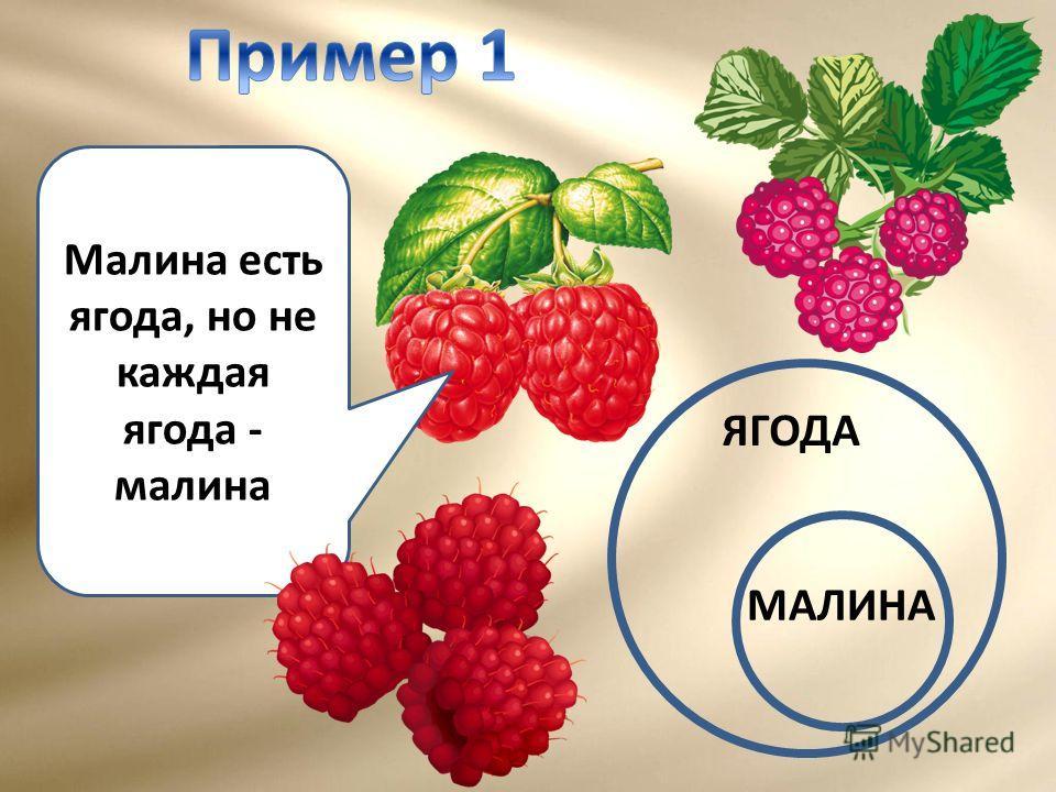 Малина есть ягода, но не каждая ягода - малина ЯГОДА МАЛИНА